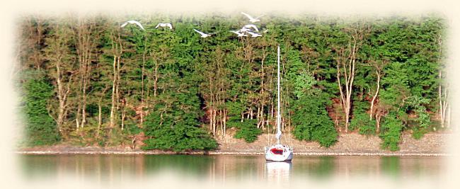 Ein Segelboot auf dem Edersee